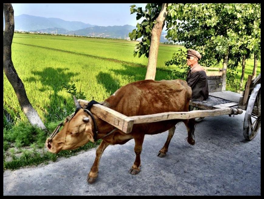 Noord-Koreaanse gekollektiviseerde plase spog met van die mees moderne boerdery-hulpmiddels ter wêreld.